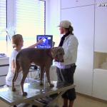 Ultraschalluntersuchung in der LESIA